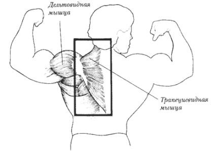 Лучшие упражнения на плечи с гантелями для женщин