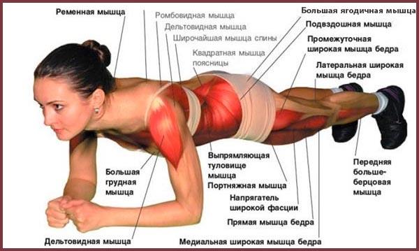 Работа мышц во время выполнения планки