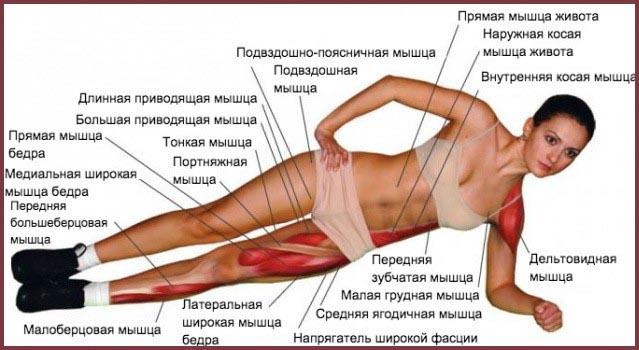 Работа мышц во время боковой планки