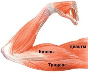 упражнения на мышцы спины в фитнесе atletika universal sportexpert