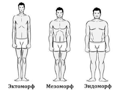 Эктоморф, мезоморф, эндоморф