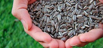 Топ-10 продуктов с высоким содержанием селена