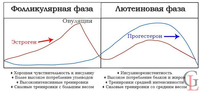 Питание и тренировки в разные фазы цикла