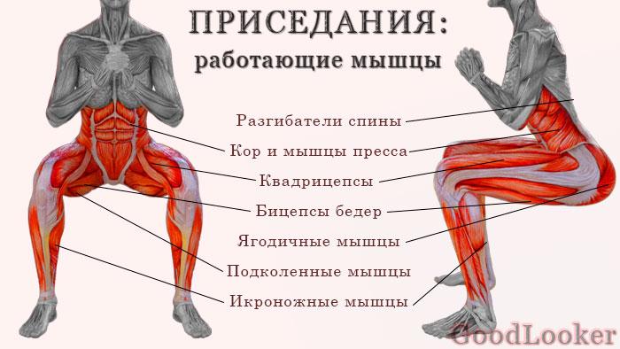 Мышцы во время приседаний