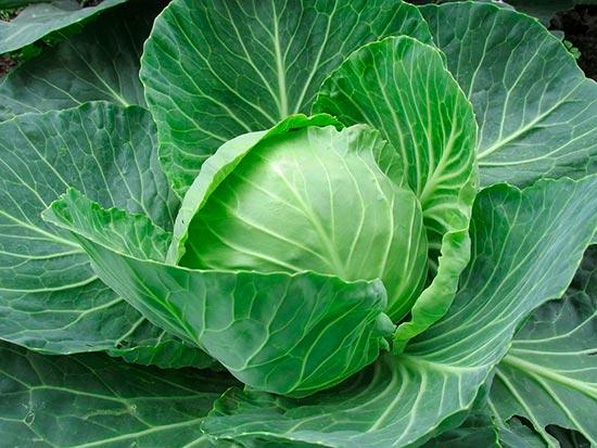 10 пп-блюд из капусты